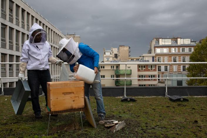 Deux migrants sur un toit s'occupent d'une ruche.
